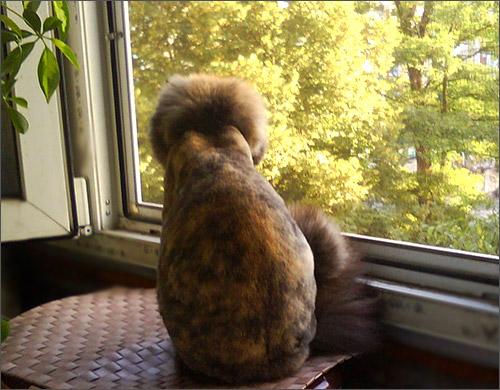 Кошка и лето