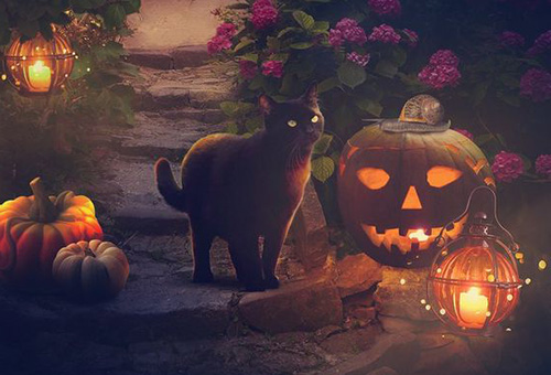 Хэллоуин и черная кошка