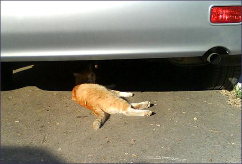 Солнечные кошки осени