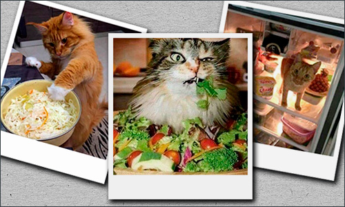 кошки и веганство