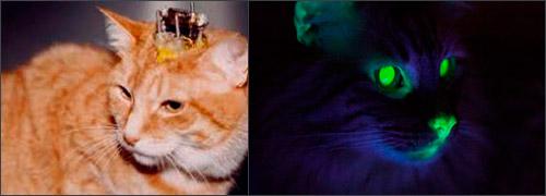 опыты на кошках
