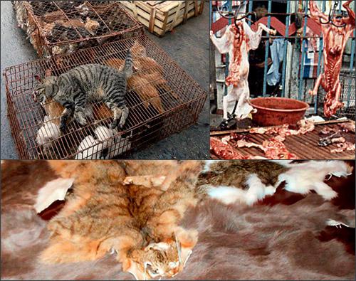 убийство кошек для еды