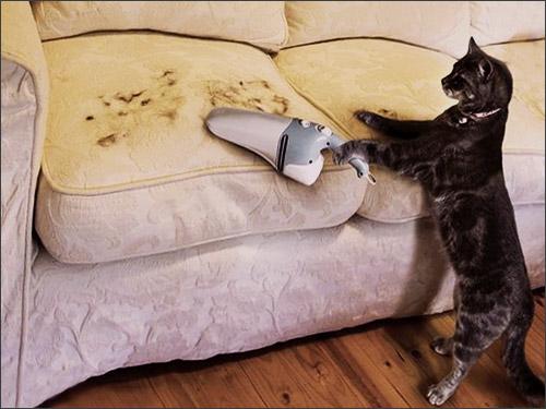 Убрать шерсть кошки