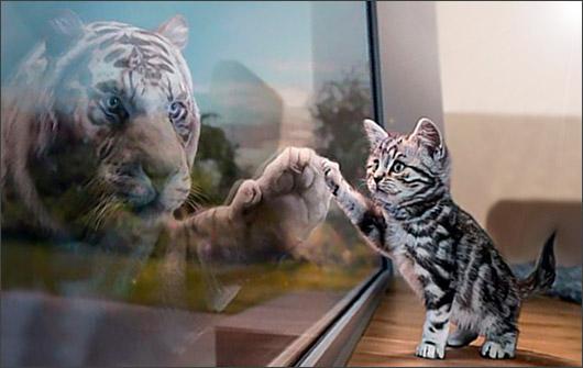 большие и малые кошки