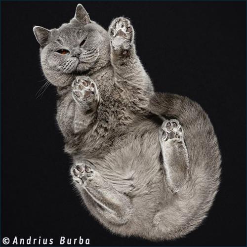 кошки - вид снизу