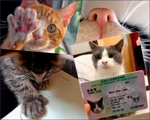 Кошки: узор лапы и носа индивидуален