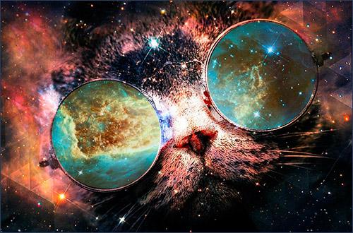 Кошки и Вселенная
