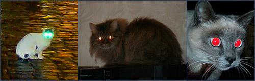 Свечение глаз кошек