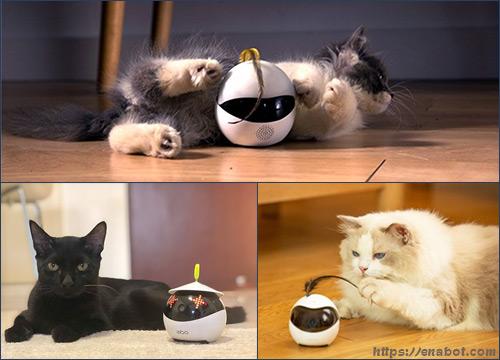 Ebo робот для кошек