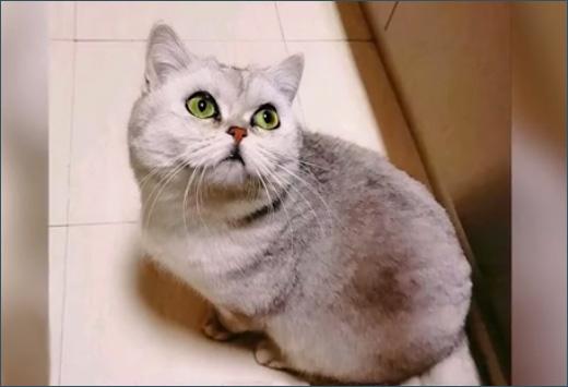 Коронавирус и кошки