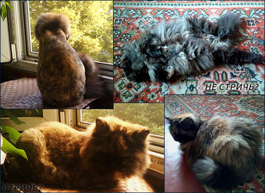 Стрижка кошки