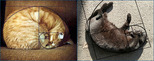 Кошки и золотое сечение