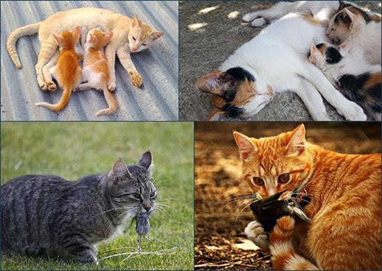Кошки и молоко
