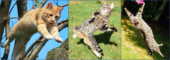 Курдюк у кошек