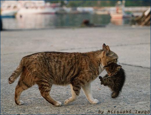 Перенос котят